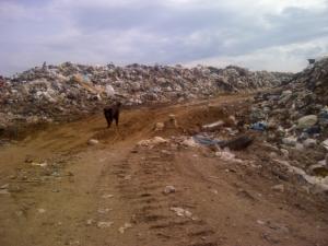 Mülldeponie bei Perm (Russland) © ABF- BOKU
