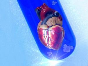 Herz in der Petrischale